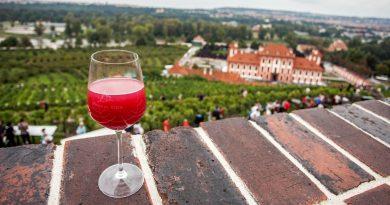 Léto ve znamení vína vtrojské botanické zahradě