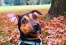 Průzkum: Češi utratí v průměru téměř 16 tisíc za rok za svého psa