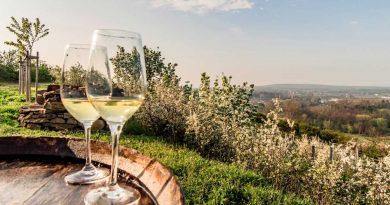 """Vydejte se za hranice ochutnat """"letošní"""" vína v Dolním Rakousku"""