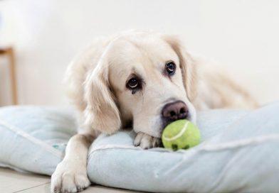 Pozor na některé psí pachy, mohou signalizovat různá onemocnění