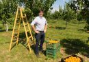Jak se vyrábí mošty od Ovocňáku? Poctivě a z vlastního ovoce!