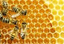 Falšování medů kleslo vloni na třetinu. Jakost medů ze zahraničí roste, zaujímají jednu třetinu trhu v Česku