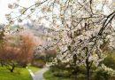 Sledujte on-line příchod jara do trojské botanické zahrady