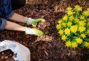 Jste připraveni na novou zahradnickou sezónu? Po zimě zkontrolujte nejen stav pozemku, ale i vašich zahradních pomocníků