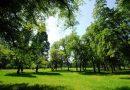 Hlavnímu městu se daří naplňovat plán vysadit milion stromů za osm let