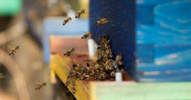 Včelka od Slavia pojišťovny pomůže českým včelařům