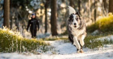 5 mýtů o psech, kterým se stále ještě věří