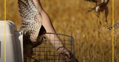 BILLA vyhlašuje březen měsícem divoké přírody. Pomoc zaměří na obojživelníky