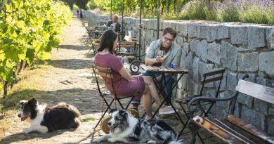 Začalo natáčení nové české komedie Řekni to psem