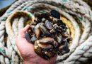 Chuť moře se vrací. Vzáří zahajuje třetí ročník festivalu Prague Mussel Week
