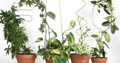 Díky rostlinným oporám budou vaše pokojovky šplhat vzhůru jako po niti